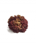 organic-red-sail-red-rapid