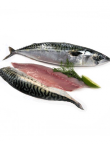 atlantic-mackerel-saba-fillet