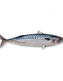 atlantic-mackerel-saba-whole